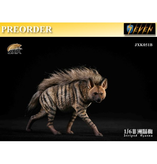 PREORDER: JXK 1/6 JXK051 Striped Hyaena: Set #B