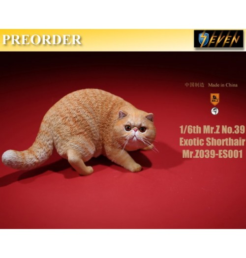 PREORDER: Mr.Z 1/6 Real Animal S39 Exotic Shorthair (ES001)