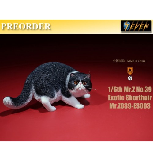 PREORDER: Mr.Z 1/6 Real Animal S39 Exotic Shorthair (ES002)