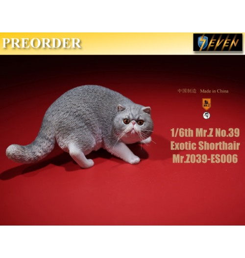 PREORDER: Mr.Z 1/6 Real Animal S39 Exotic Shorthair (ES006)