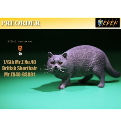 PREORDER: Mr.Z 1/6 Real Animal S40 British Shorthair (RB001)