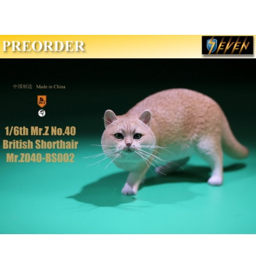 PREORDER: Mr.Z 1/6 Real Animal S40 British Shorthair (RB002)
