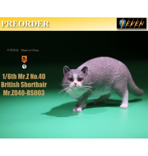 PREORDER: Mr.Z 1/6 Real Animal S40 British Shorthair (RB003)