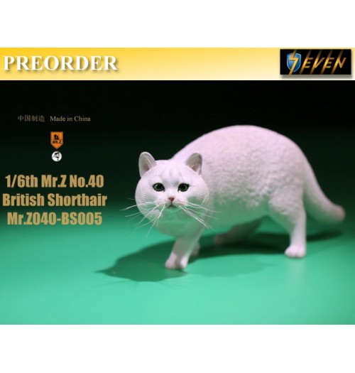 PREORDER: Mr.Z 1/6 Real Animal S40 British Shorthair (RB005)
