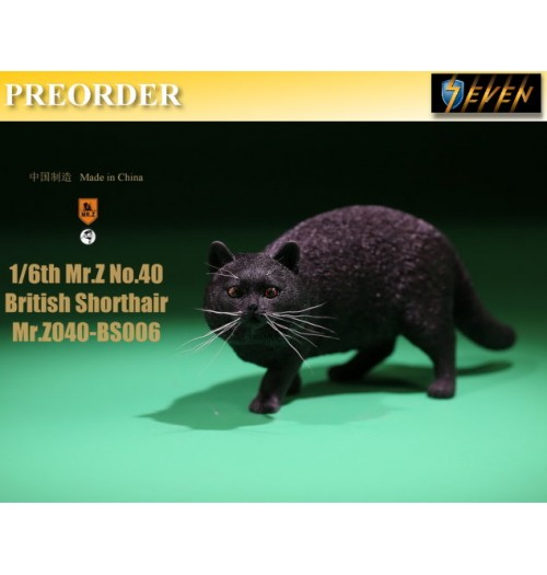 PREORDER: Mr.Z 1/6 Real Animal S40 British Shorthair (RB006)