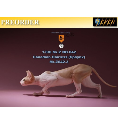 PREORDER: Mr.Z 1/6 No.42 Canadian Hairless (Sphynx) #C: Boxset